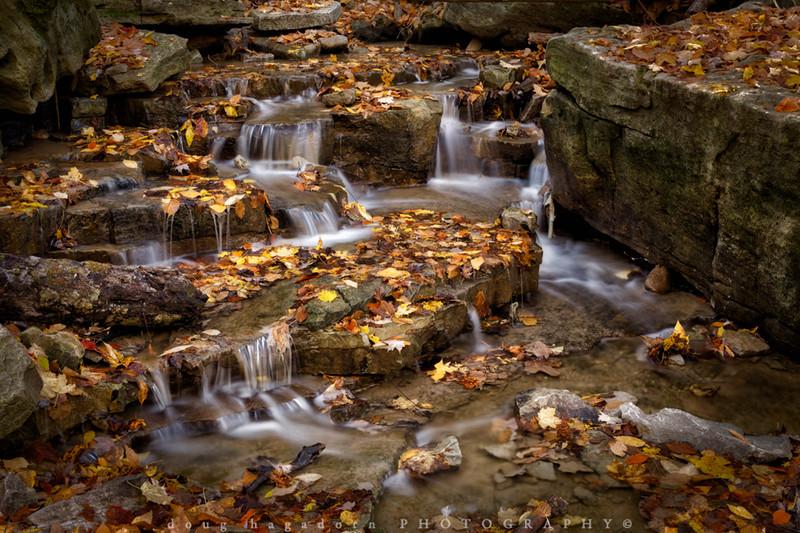 Fallen Leaves (#0227)