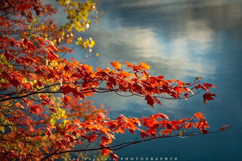 Down Autumn's Lazy River (#0780)