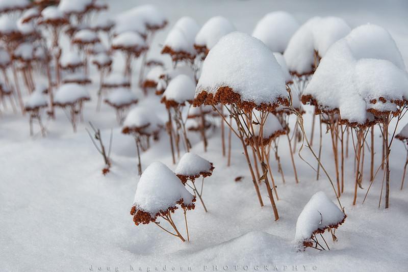 Snow-Clad (#0399)