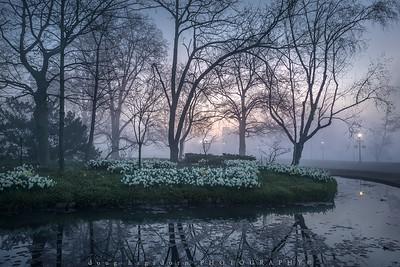 Early Fog (#0571)