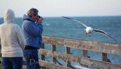 Cayucos Pier.  Photo by Tom Modugno.