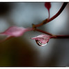 Delicate Drop