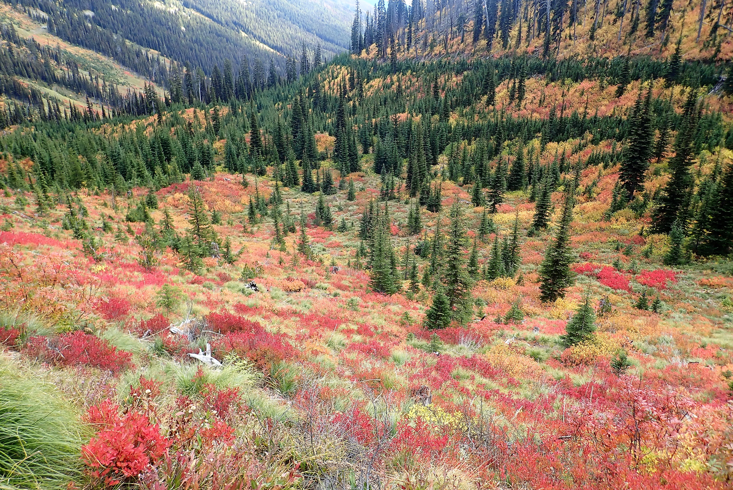 Fall colors over the pass