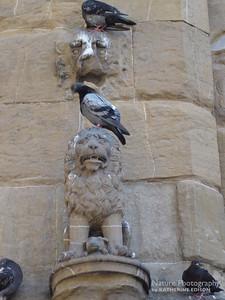 Fierce Lions