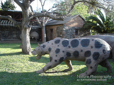 Paleo Cat and Glyptodon