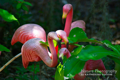 Urban Flamingo Flock
