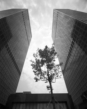 Bank of America / Atlantic Richfield Towers, Los Angeles, Calif., 1972