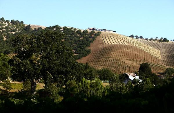Kukkula Vineyard, Paso Robles, Calif., 2008