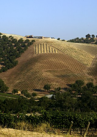 Kukkula Vineyard, Paso Robles, Calif., 2008