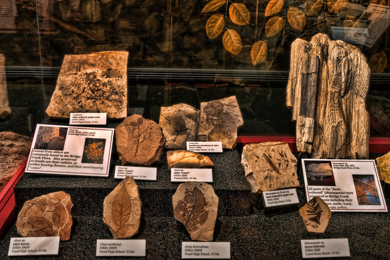 You can still Find Some of These Fossils Along The Leaf Hill Trail.