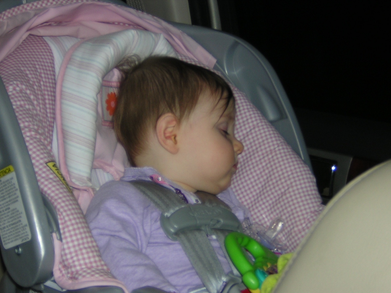 Stella catches a catnap on the way back from the Lake.nDSCN5804.JPG
