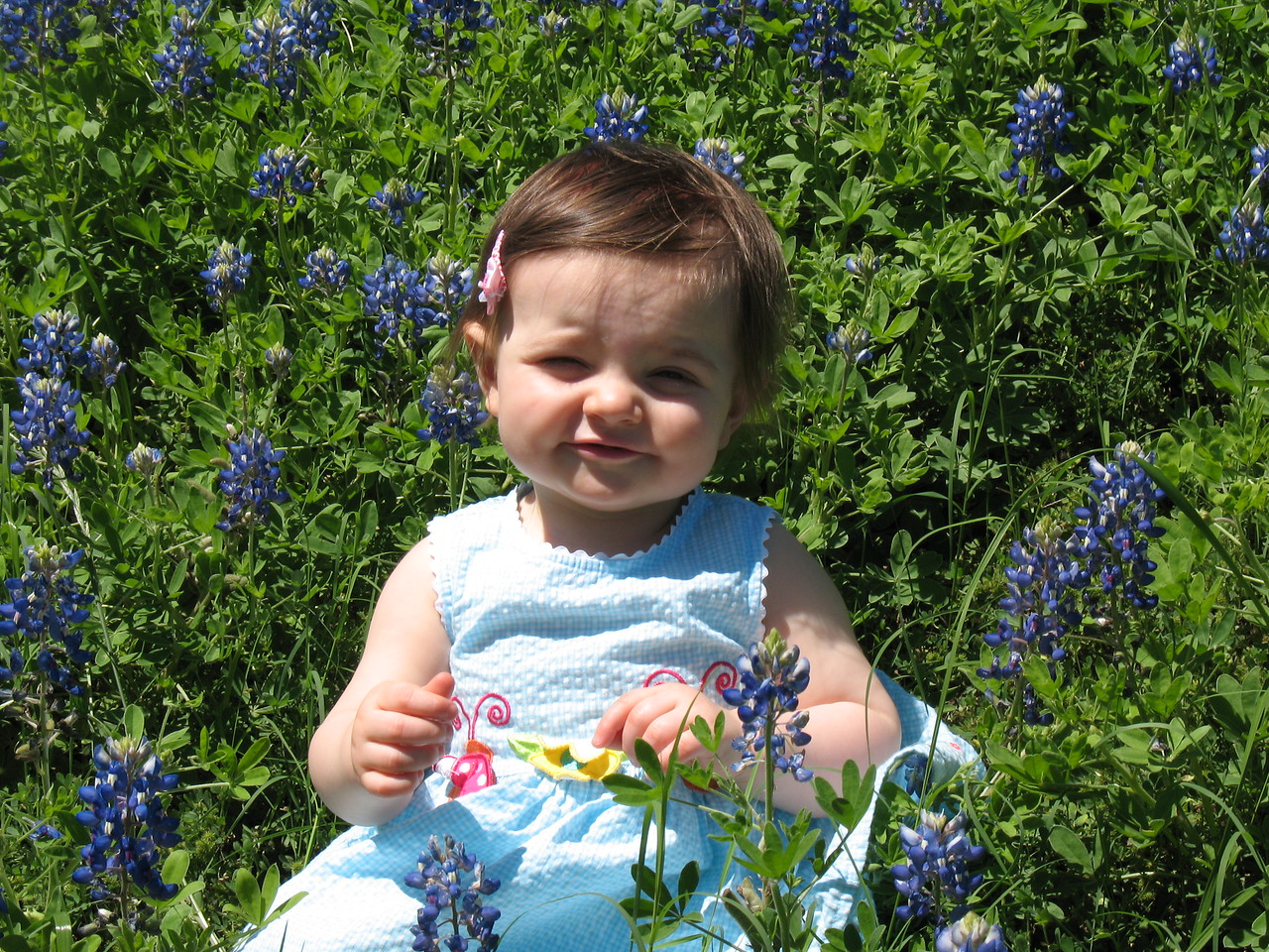 The prettiest bluebonnet ever!