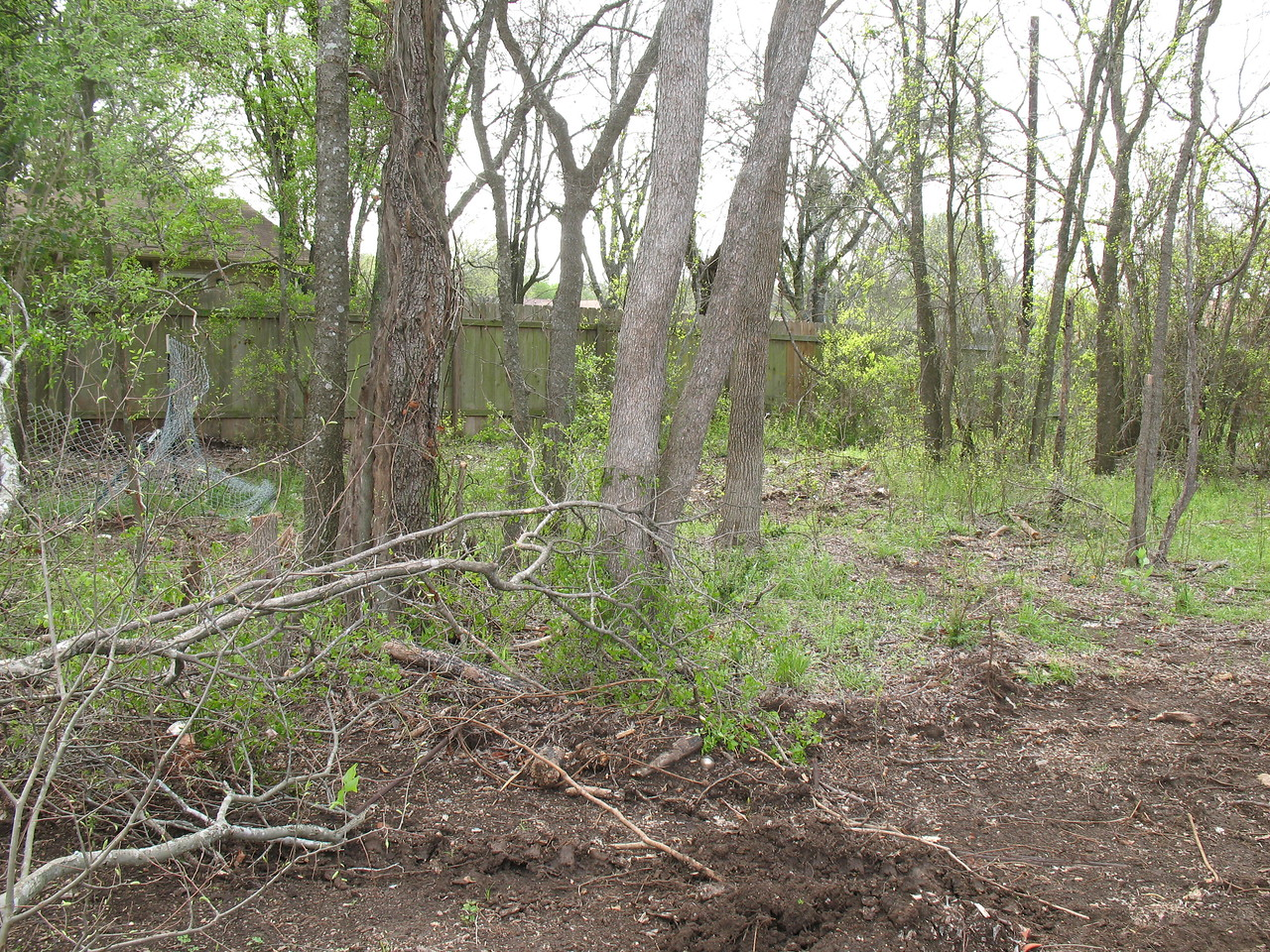 The backyard at our new house.  Look at how wooded it is!