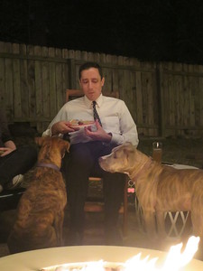 The dogs really enjoyed everyone's food