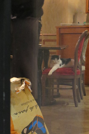 It's a cat on a chair.  IN A RESTAURANT!