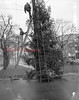(12.01.53) Community Christmas tree on Market Street.