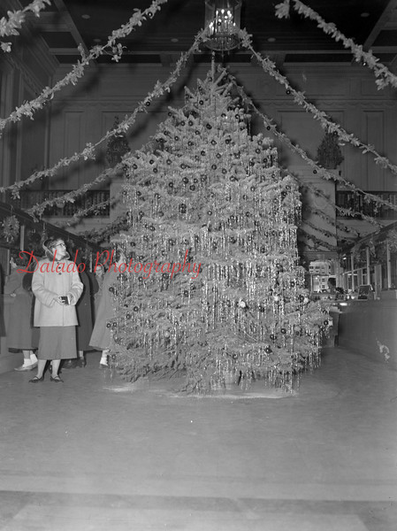 (Dec. 1954) One of the largest Christmas trees on display in the Shamokin area is this 13-foot high spruce located in the lobby of the Guarantee Trust and Safe Deposit Co., 1 East Independence Street.