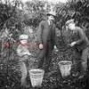 (1908) Back around the turn of the 20th Century this section of the state abounded in chestnut-bearing trees. The palatable chestnuts grew in abundance in Irish Valley, in particular. This photo, taken in 1908, shows George Richie, left, John Richie and Arthur Richie collecting chestnuts in Irish Valley.
