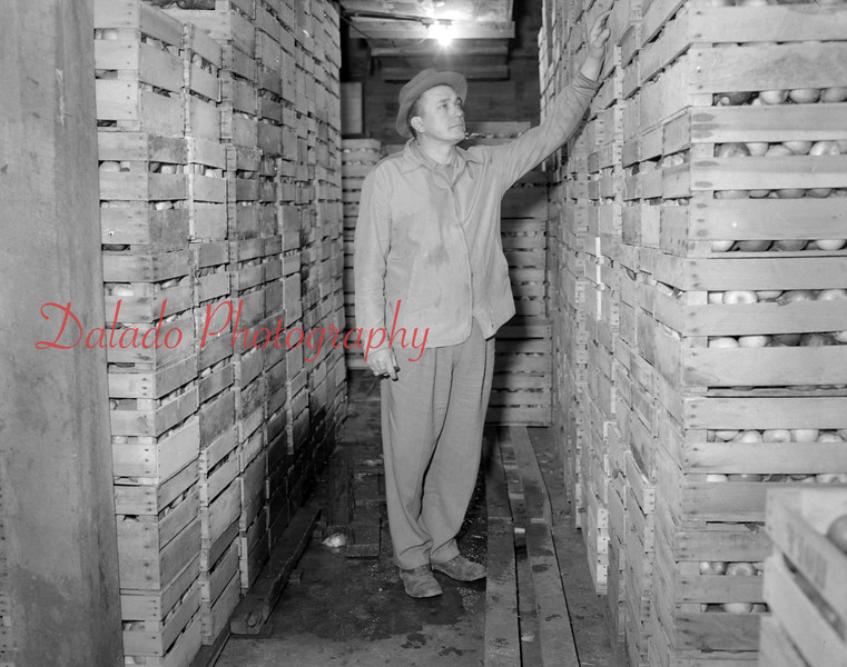 "(01.22.53) Apples are sold all year round by Mr. Anthony Abraczinskas, who owns and operates the 1,000 acre Abraczinskas Orchard and Christmas tree plantation near Numidia. In the storage room is Anthony ""Duke"" Abraczinskas."