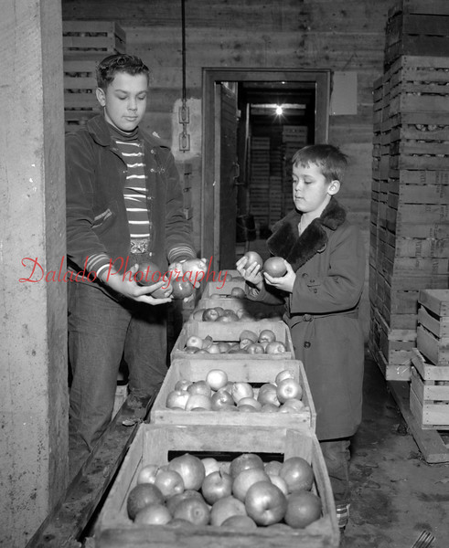 (01.22.53) Apples are sold all year round by Mr. Anthony Abraczinskas, who owns and operates the 1,000 acre Abraczinskas Orchard and Christmas tree plantation near Numidia.