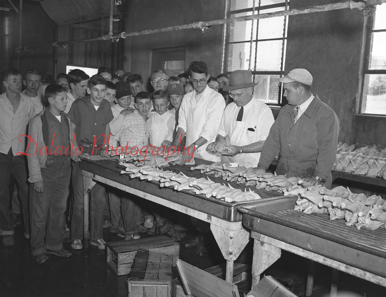 (05.19.55) Junior Chicken of Tomorrow contest at Mandata Poultry. Judges are Kermit Birth and Harry Kauffman, of Penn State University, and Kendall Merritt, of the state Bureau of Markets of Harrisburg.