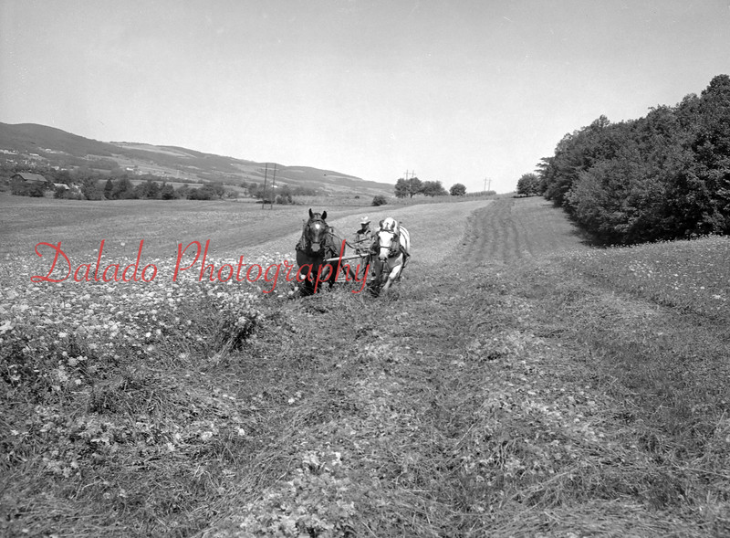 (Aug. 1955) Farming on the Morrison Brothers Farm, Danville, R.D. The farm, managed by Ellen Morrison. Operated by Harmon and Russell Morrison.