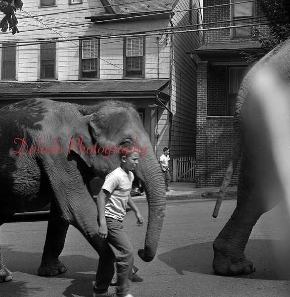 (August 1960) Elephant being offloaded on Sunbury Street to be taken to Bunker Hill Baseball Complex.