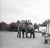 Random circus shots in 1966!