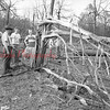 (08.05.1952) Burned trees following an explosion of a truck that caught fire on Route 44 between Mahanoy City and Brandonville on Aug. 5, 1952. The truck, reportedly owned by the Independent Explosives Co., was blown to bits. Pieces of the vehicle were found 50 feet from the crater, that was 30-by-15 feet. Trees 100 yards from the roadway were burned.