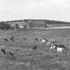 (1962) Unknown farm.