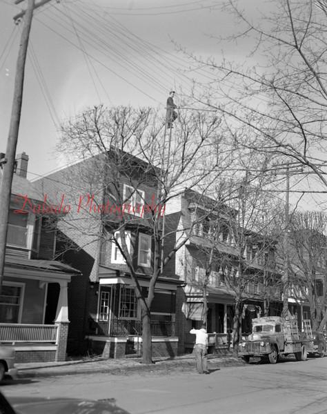 (02.21.1952) Odd way to cut a tree on Shamokin Street in Shamokin.