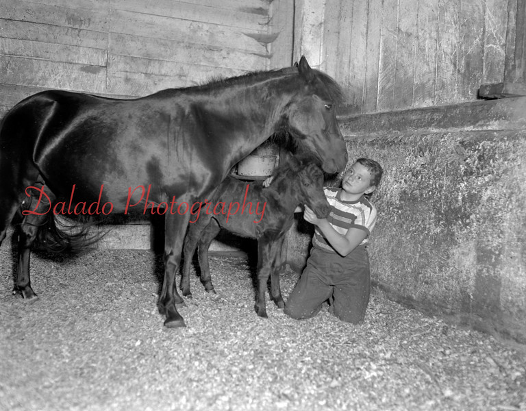 (1956) Pony.
