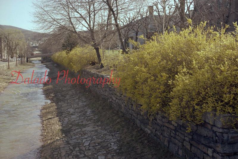 (05.10.77) Flowers along Shamokin Creek.