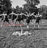 (1958 or 59) Shamokin Citizen photo. Unknown cheerleading squad.