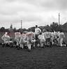 (1956, April through July) Mount Carmel football.