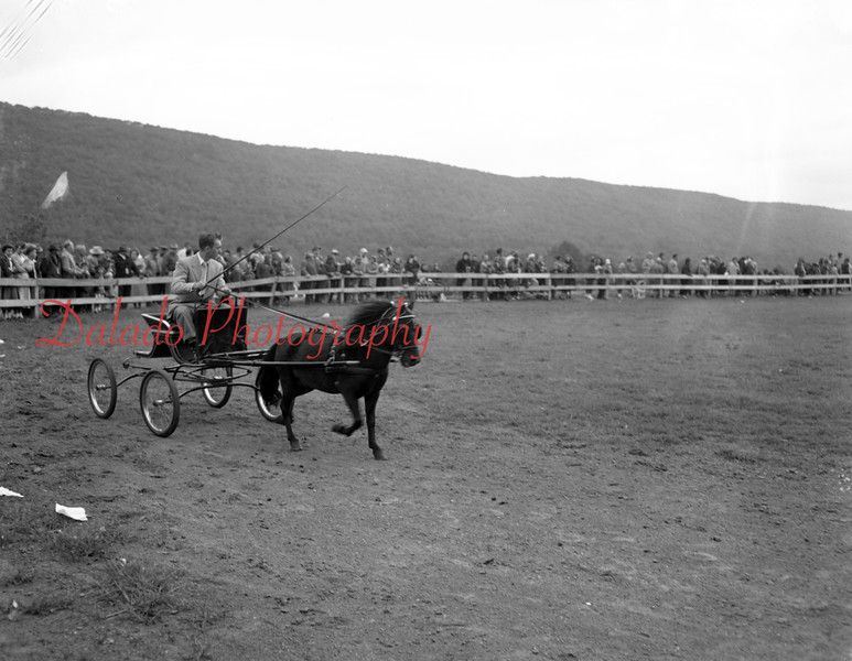 (10.15.53) Annual Kiwanis Horse Show at Mt. Poco, off Trevorton Road. Judson Stoddard, of Totherstone Farms, Kingsley, is shown driving his Shetland poney. It won second place.