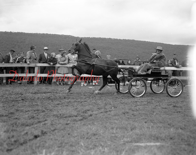 (10.15.53) Annual Kiwanis Horse Show at Mt. Poco, off Trevorton Road. class. A Hackney pony, driven by Darwin Feese, general manager of the horse show, attracted attention from thousands of horse lovers who gathered at the Darwin Feese Show Ring. This was the ninth annual show.