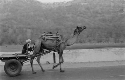 Camel Cart.