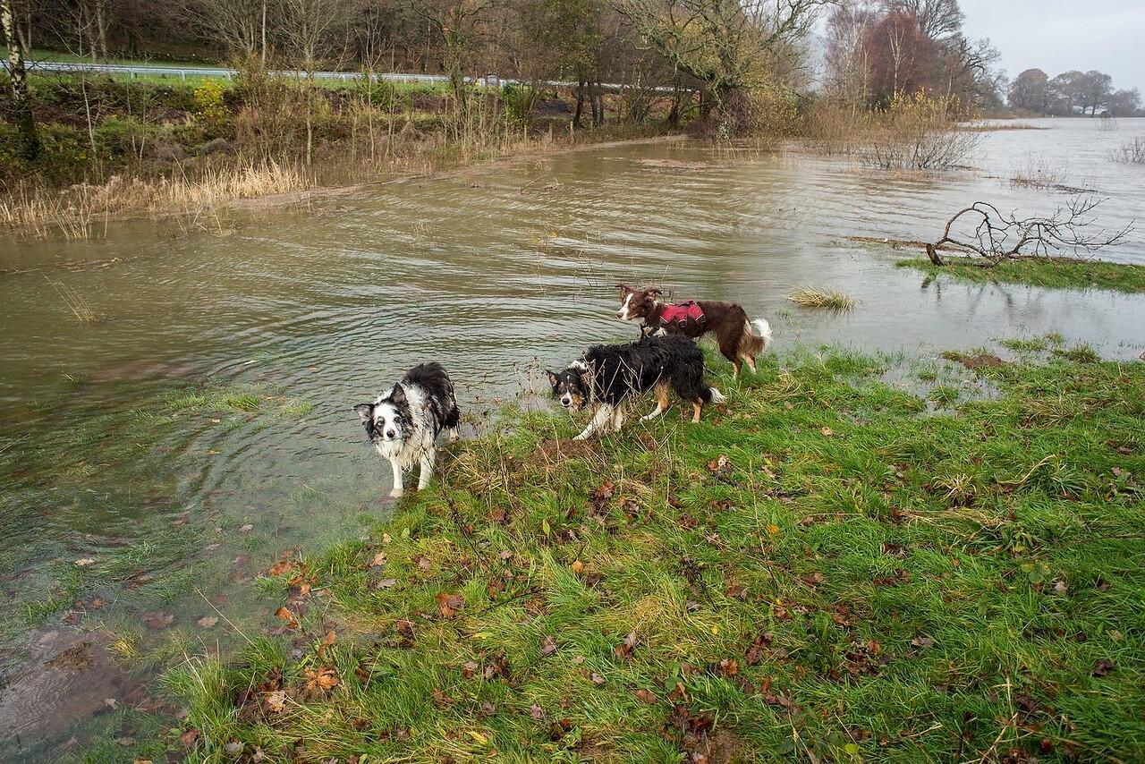 Thu 23rd Dec : Flooded Walk