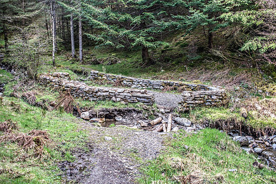 Whinlatter Forest : The Sheepfold In The Fold