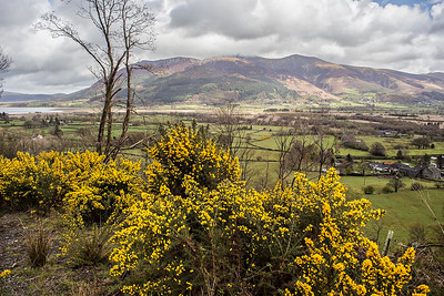 Skiddaw After The Snow