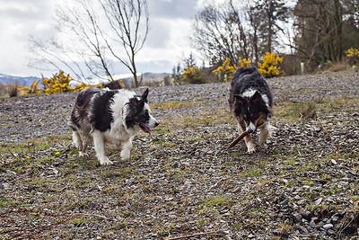 Cassie & Bess : the Stick Game