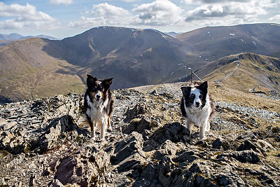 Grisedale Pike : the summit all to ourselves