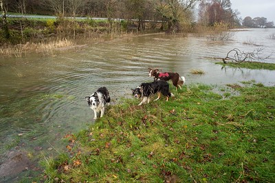 Thu 23rd Dec : Flooded Walk