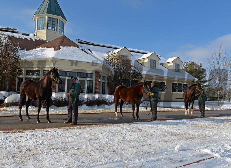 l-r, Mineshaft, A.P. Indy, Honor Code<br /> Lane's End Press Pass event at Lane's End Farm in Versailles, Ky., on Jan. 17, 2018.