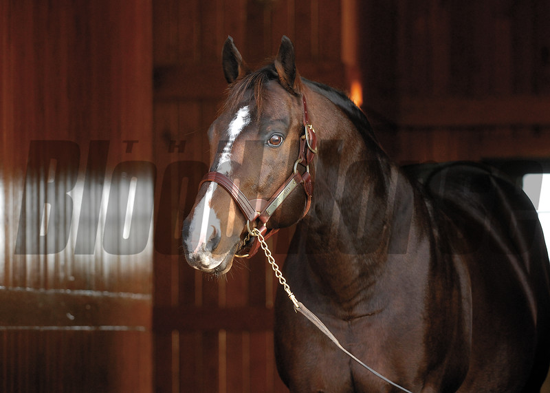 A.P. Indy at Lane's End Farm near Versailles, Ky. on Dec. 20, 2006. Leading sire of 2006.<br /> APINDY12_20 image165<br /> Photo by Anne M. Eberhardt
