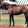 A.P. Indy - 1990 Keeneland July Yearling Sale brought $2,900,00<br /> Anne M. Eberhardt Photo