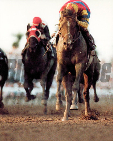 A.P. Indy winning 1992 Breeders' Cup