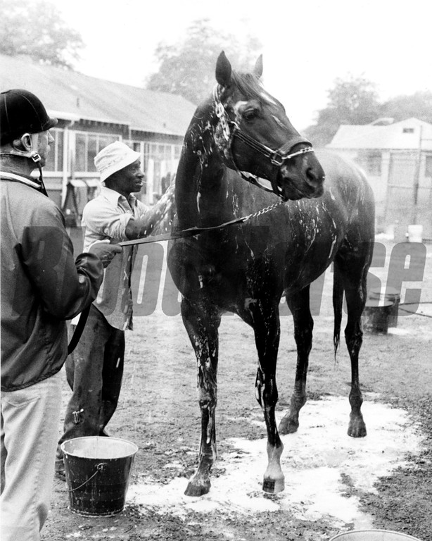 Alydar getting bathed after his morning workout. Charlie Rose keeps him in check while Clyde Sparks scrubs him off in 1979.<br /> Photo by: Bob Coglianese/NYRA