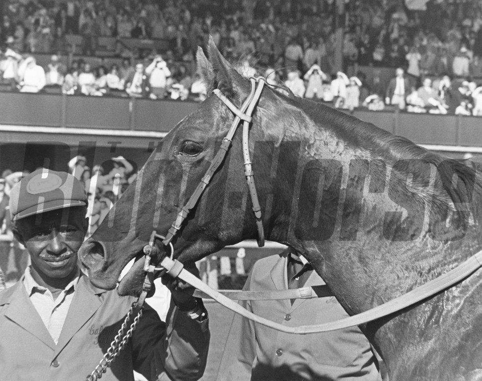 Alydar headshot in 1978 at Belmont Stakes with groom, Clyde Sparks. <br /> Photo by: Milt Toby